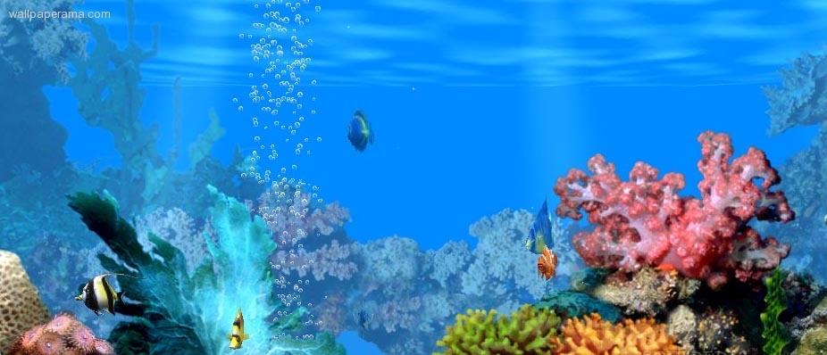 Peceras fondo de pantalla imagui for Peceras con peces