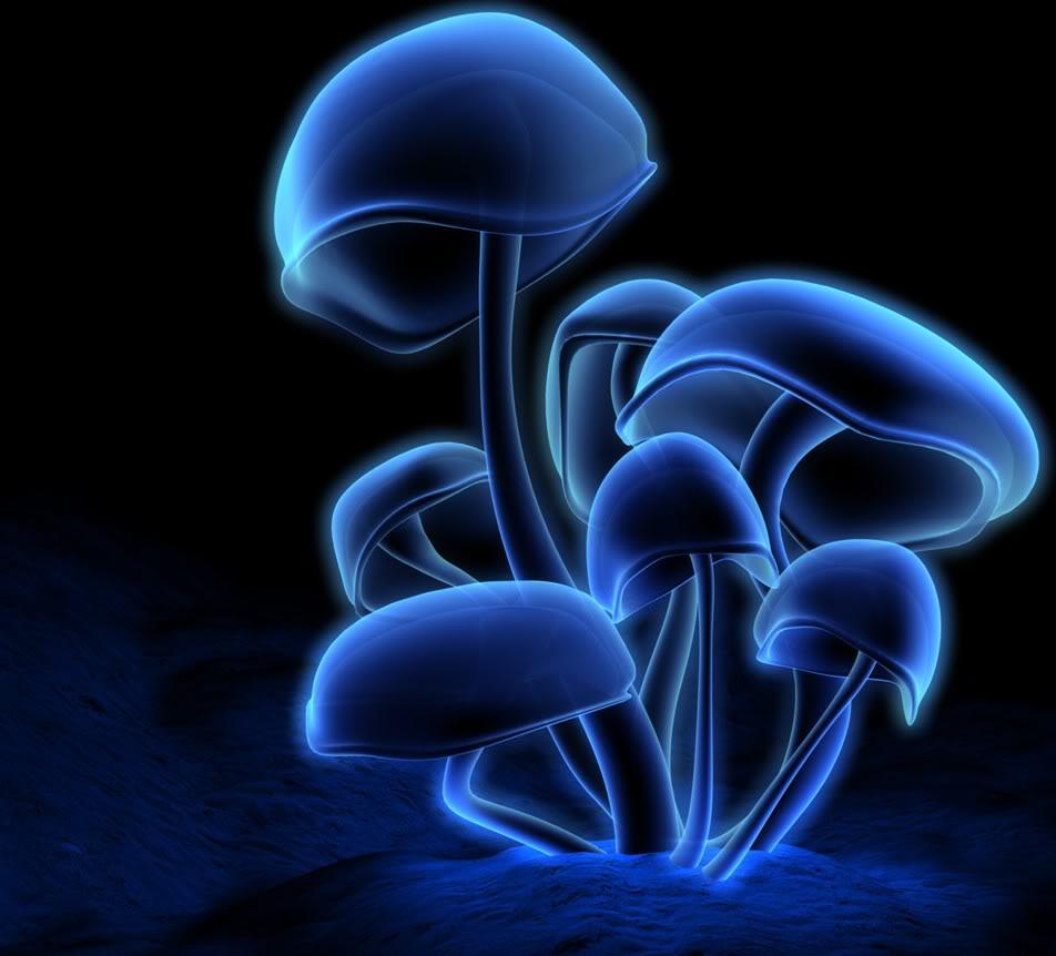24p-759-blue-mushroom.jpg