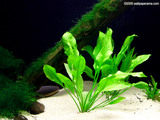 Aquarium Plant Wallpaper