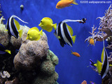 aquariums Wallpaper