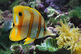 Salt Water Aquarium Wallpaper