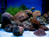 Salt Water Tank Wallpaper