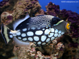 African Fish Wallpaper