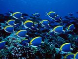 Blue Reef Wallpaper