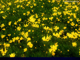 Flower Bed Wallpaper