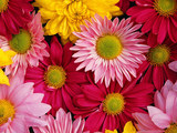 Flower Bouqet Wallpaper