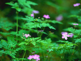 Forest Flowers Wallpaper