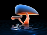 3d Mushroom Wallpaper