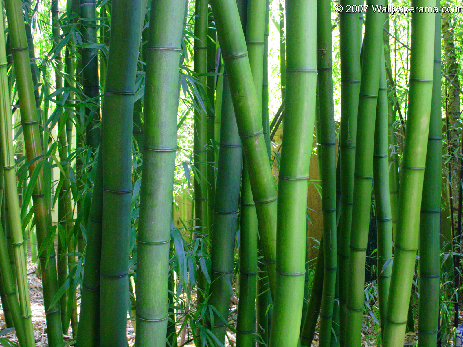Bamboo Wallpaper Free Hd Backgrounds Images Pictures