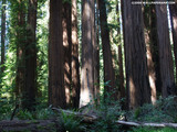 Red Wood Grove Wallpaper