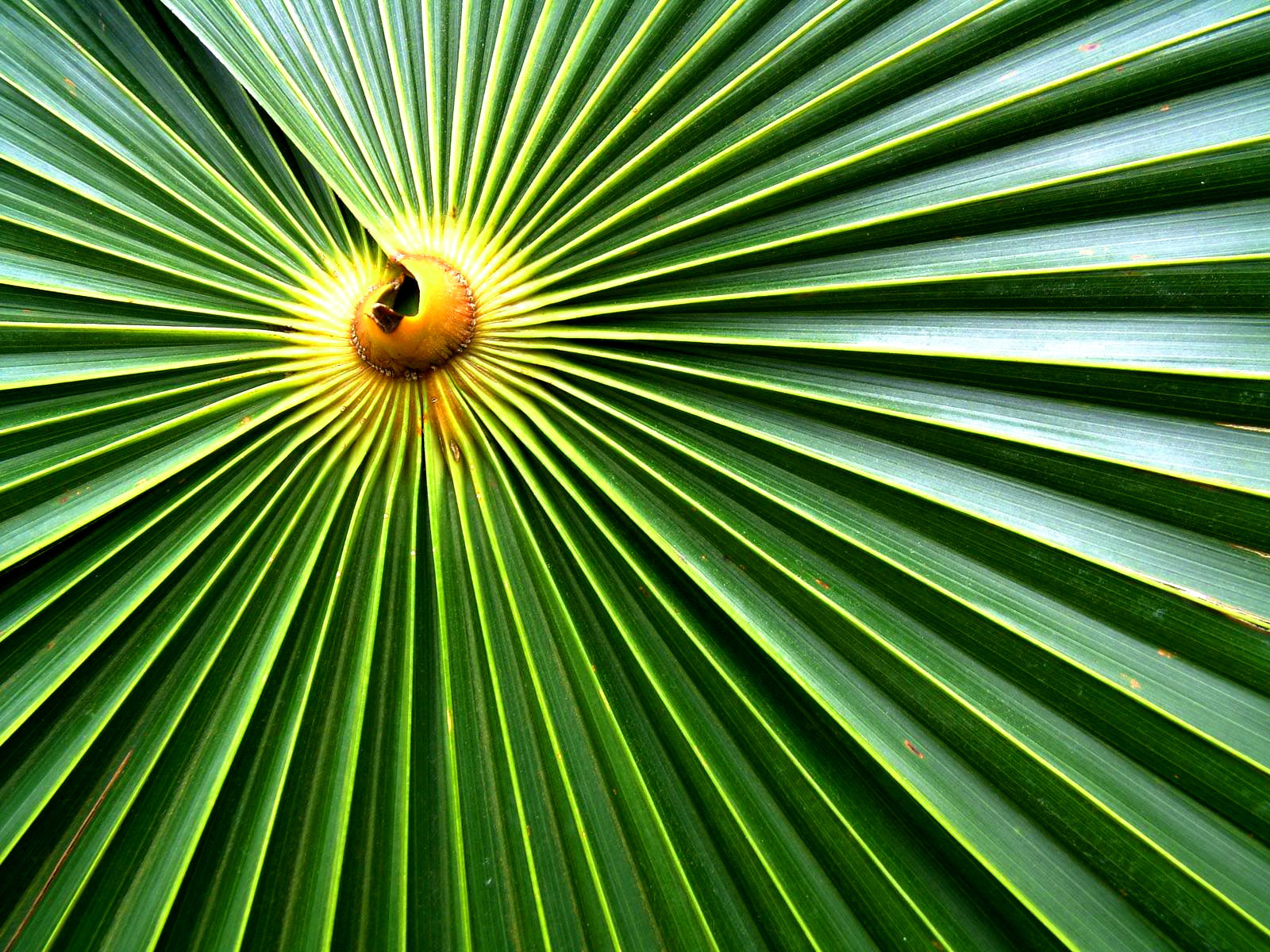 Palm Sunday Wallpaper Free HD Backgrounds Images Pictures
