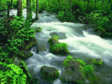 Green Water Fall Wallpaper