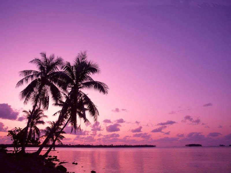 Tropical Sunrise Wallpaper Free HD Backgrounds Images Pictures