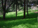 Green Forest Wallpaper