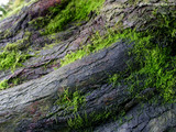 Green Moss Wallpaper