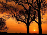 Sunset Trees Wallpaper