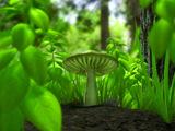 Mushroom Wallpaper