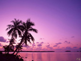 Purlple Sunset Wallpaper
