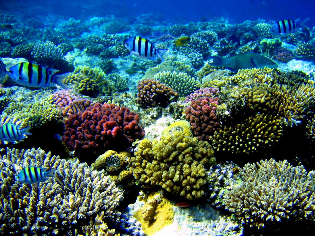 Coral Reef Wallpaper Free HD Backgrounds Images Pictures